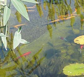 Faune d'une piscine naturelle